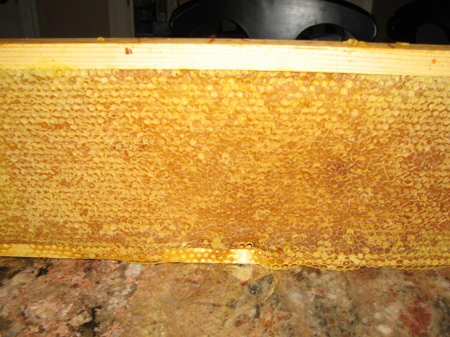 Sweet Rewards: HoneyHarvest
