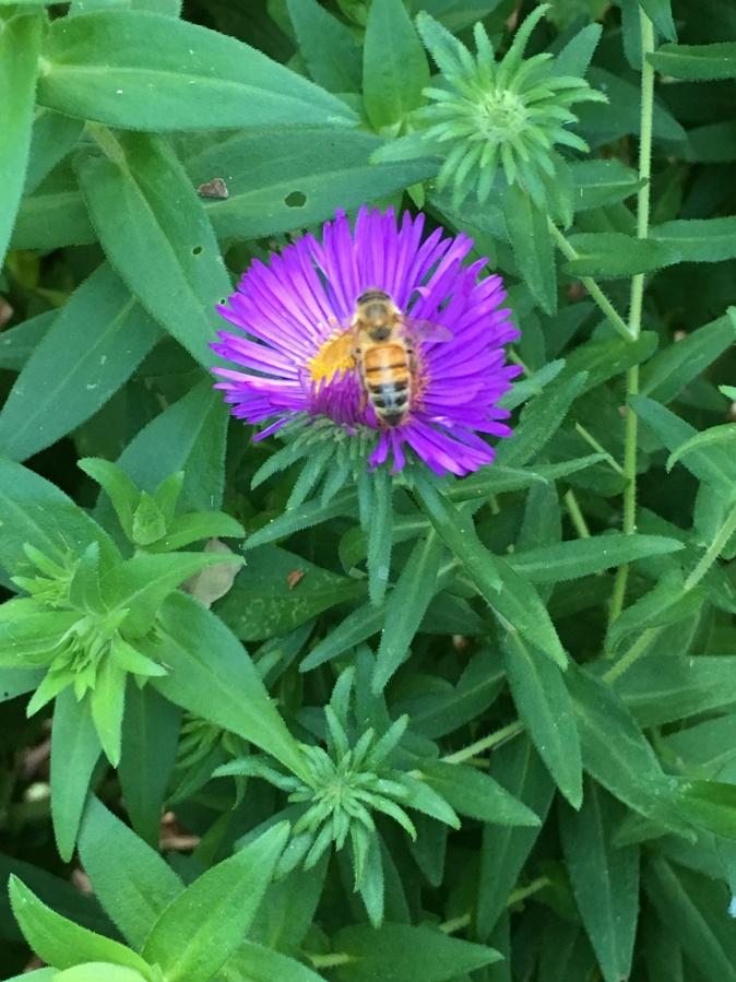 Fall Bees