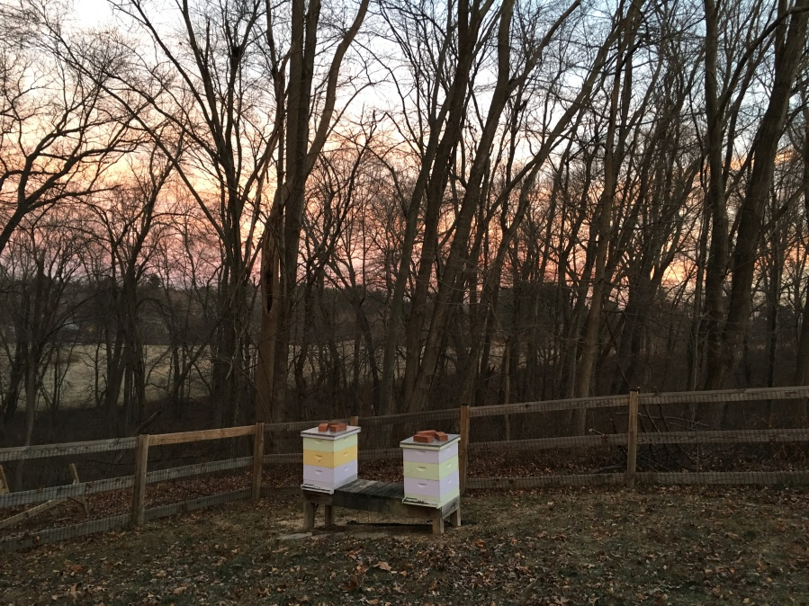 Winter Solstice and Honey Bees