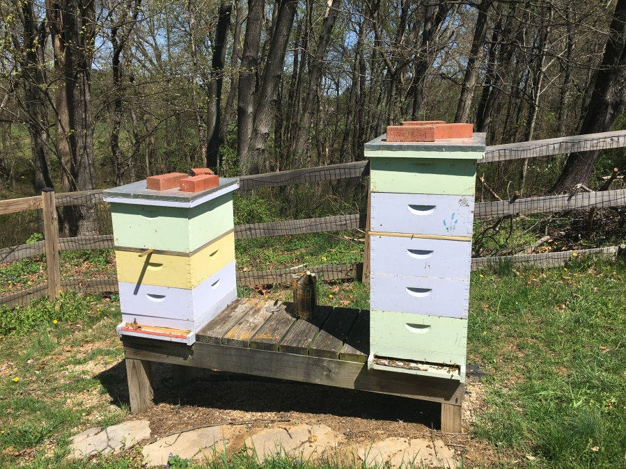 New Beginnings and New Bees
