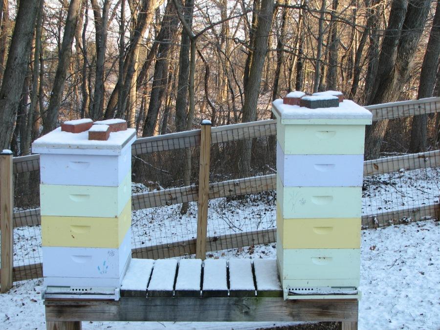 Winter Bee FoodSources