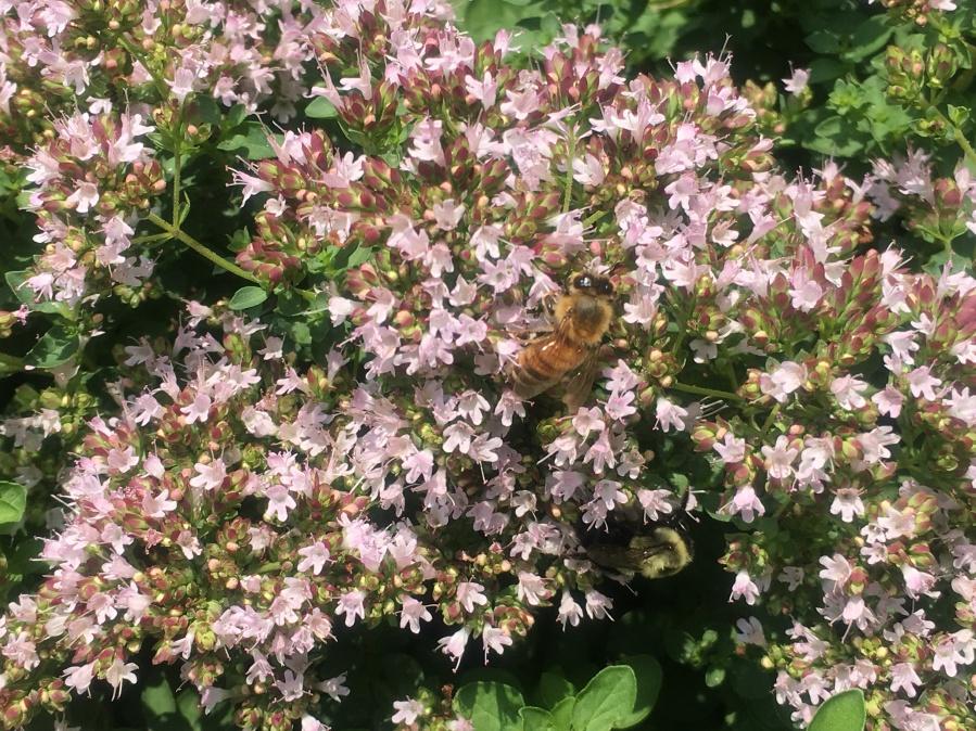Vegetable Gardening for HoneyBees